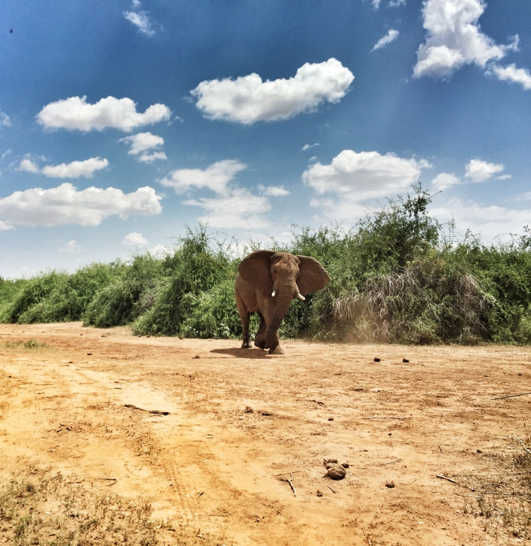 This elephant isn't friendly, he took off after us for a bit